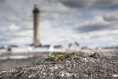 偏僻的螃蟹海岸线在布里坦尼,法国,有剪影的  库存图片