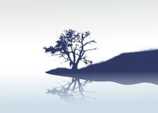 偏僻的镜子河结构树 库存照片