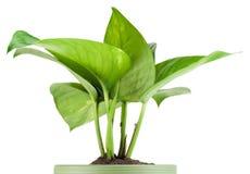 偏爱的室内植物 库存图片