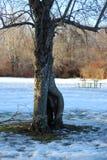 偏僻和冷的树在公园 库存图片