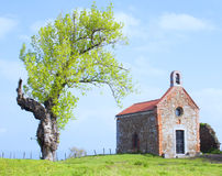 偏僻寺院和树 免版税库存图片