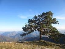 偏僻的一个结构树 免版税库存照片