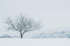 偏僻的光秃的树在冬天 免版税图库摄影