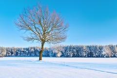 偏僻的光秃的树在森林附近的一个多雪的草甸。 免版税库存照片