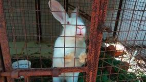 偏僻的兔宝宝 免版税库存图片