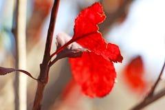 偏僻的叶子在冬天 图库摄影