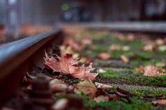 偏僻的叶子 免版税图库摄影