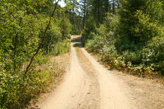 偏僻的土路在森林里 免版税库存图片