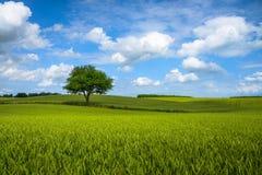 偏僻的夏天树 免版税库存照片