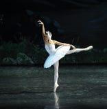 偏僻的天鹅芭蕾天鹅湖 免版税库存照片