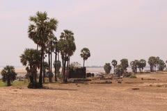 偏僻的寺庙 库存照片