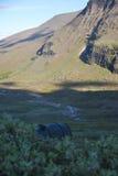 偏僻的帐篷 图库摄影