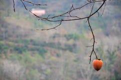 偏僻的果子 库存照片