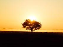 偏僻的树剪影在日出的与作为背景的薄雾 库存照片