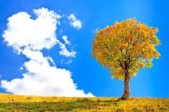 偏僻的树和一朵大云彩在蓝天背景 免版税库存照片