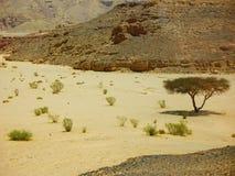 偏僻的树和有些灌木在沙漠 免版税库存图片