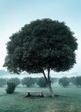 偏僻的树和空的长凳 免版税库存照片
