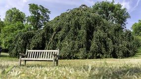 偏僻的树和空的长凳 免版税库存图片
