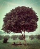 偏僻的树和空的长凳 库存图片