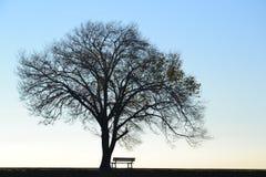 偏僻的树和长凳 免版税库存图片