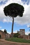 偏僻的树在一个古老村庄 免版税库存照片