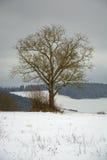 偏僻的树在冬天国家 免版税库存照片