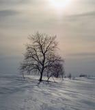 偏僻的树在冬天在俄罗斯 库存照片