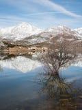 偏僻的树在山脉的一个湖 免版税库存图片