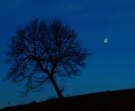 偏僻的树在晚上 免版税图库摄影