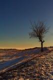 偏僻的树在晚阳光下 库存图片