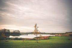 偏僻的树在湖的一个公园 免版税库存照片
