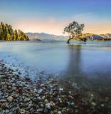 偏僻的树在湖 免版税库存照片