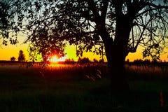 偏僻的树日出 库存图片
