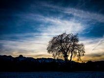 偏僻的树日落 免版税库存照片
