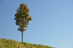 偏僻的树风景在秋天颜色的在与明亮的蓝天的草小山 免版税图库摄影
