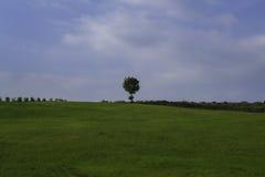 偏僻的树,克罗地亚 免版税库存图片