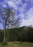 偏僻的树, 免版税库存图片