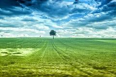偏僻的树01 免版税图库摄影