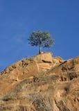 偏僻的树 库存照片