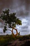 偏僻的树 免版税库存图片