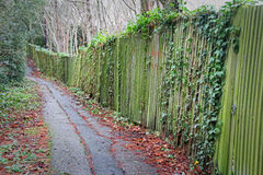偏僻的森林足迹道路 免版税库存照片
