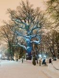 偏僻的橡树在冬天晚上 库存照片