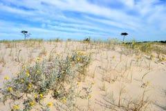 偏僻的沙丘 免版税图库摄影