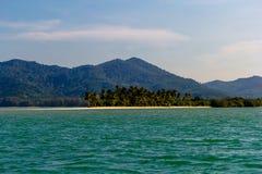 偏僻的海滩的棕榈树丛 库存图片