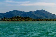 偏僻的海滩的棕榈树丛 免版税库存照片