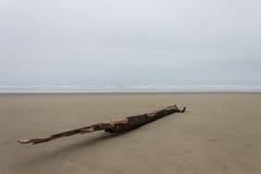 偏僻的漂流木头 免版税库存照片