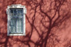 偏僻的视窗 一棵树的树荫在墙壁上的 免版税库存照片