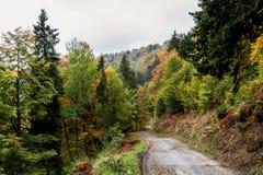 偏僻的道路在秋天森林里 免版税库存照片