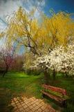 偏僻的长凳在春天期间的公园 免版税图库摄影