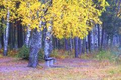 偏僻的长凳在秋天森林里 免版税库存图片